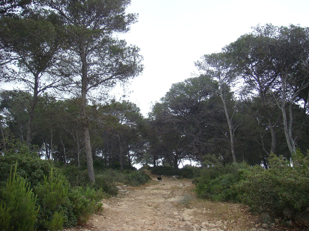 The Carmel Forest