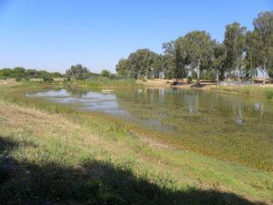 The Yarkon River