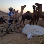 Israel National Trail Bike Trip - Camels